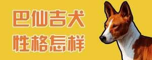 巴仙吉犬性格怎样